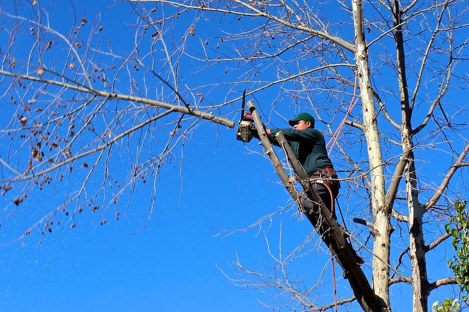 Devis abattre un arbre  à Fins