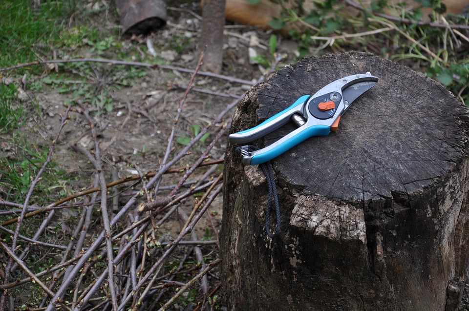 Devis élagage arbre