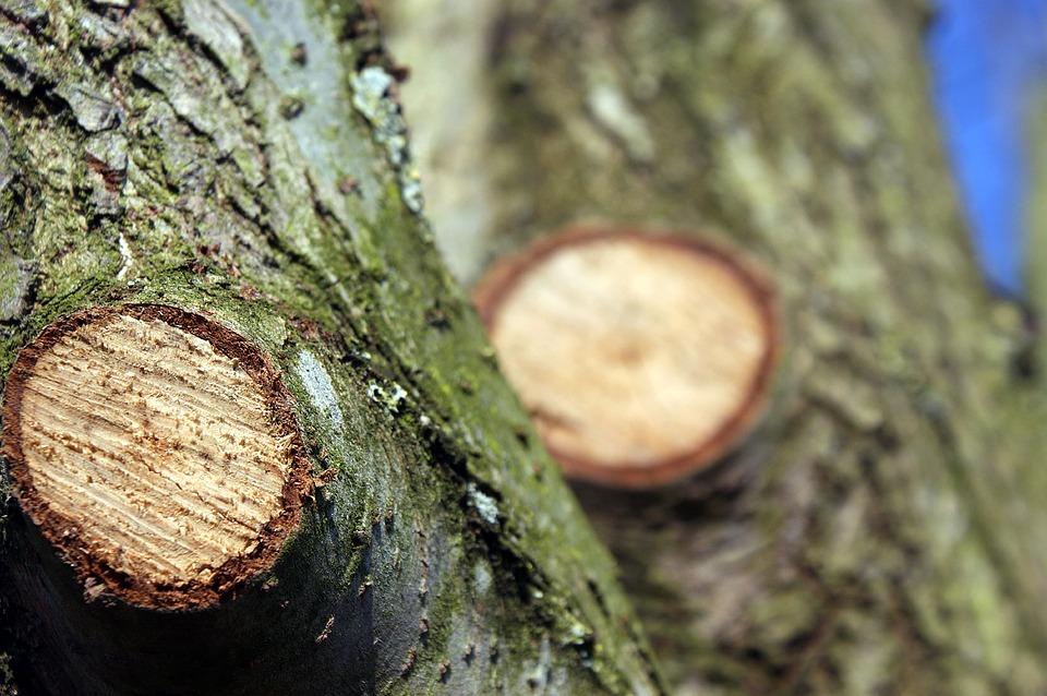 Entreprise élagage arbres  à Fins
