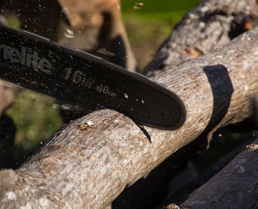 Tarif élagage arbre  à Fins
